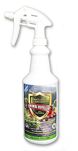 Repellent Spray for Rodents & Animals. Cats, Rats, Squirrels, Mouse & Deer. Repeller & Deterrent for Dogs, Critters, Mice, Raccoon & Skunk. Natural Armor Peppermint Quart Ready To Use (Spray Quart Use)