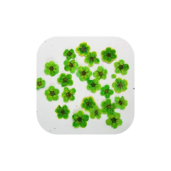 Natural Small Daffodils Dried Flowers for Clock Home Decoration DIY Decoration 200Pcs,Green