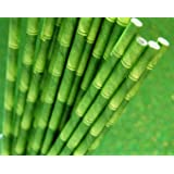 "25 Paper Drinking Straws Green Bamboo 7.75"" Retro Vintage Style Durable"