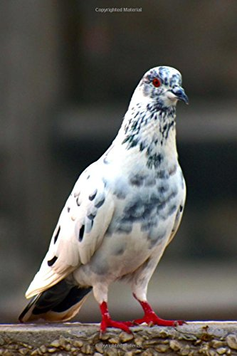 Read Online Red-Footed White and Grey Pigeon Journal: 150 Page Lined Notebook/Diary ebook