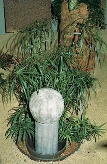 Cyperus Umbrella Plant 2.000 ()
