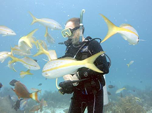 (Diversity & Design in the Ocean : Coral World, St. Thomas USVI)