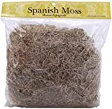 Bulk Buy: Panacea Spanish Moss 8 Ounces Natural 21063 (3-Pack)