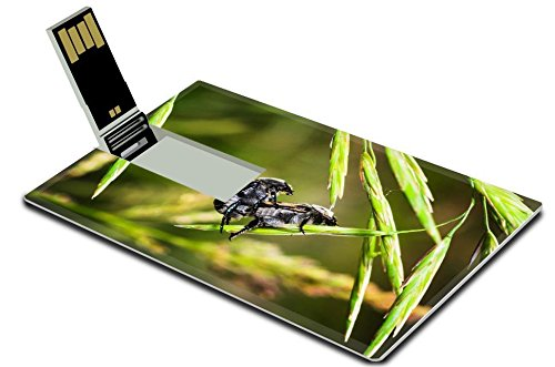 luxlady-32gb-usb-flash-drive-20-memory-stick-credit-card-size-brown-beetles-on-a-blade-of-grass-on-a