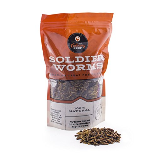 Culinary Coop Chicken Treats - Dried Soldier Worms, 1 lb (Soldiers Treat)