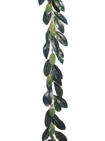 Magnolia Leaves - 6