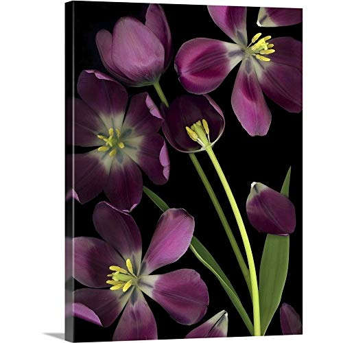 GREATBIGCANVAS Gallery-Wrapped Canvas Entitled Purple Tulips, Leaves and Stems by Deddeda Photography 23
