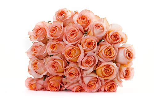 Martha Stewart Roses by BloomsyBox - Two Dozen Peach Coral Reef Roses Selected by Martha and Hand-Tied, Long Vase Life