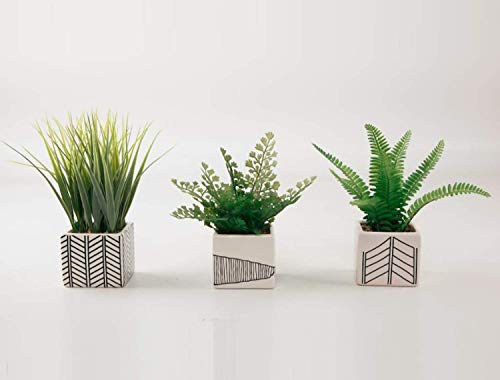 Ella and Lulu Dessign Set of 3 Ferns and Grass in Chevron pots Greenery One Size ()