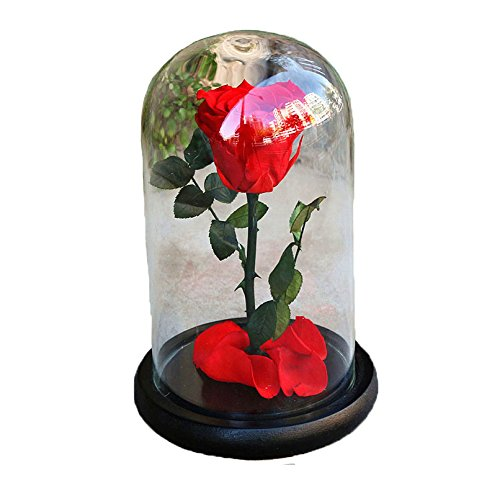 FangLanz Handmade Preserved Flower Rose Upscale Immortal Flowers Fresh Roses