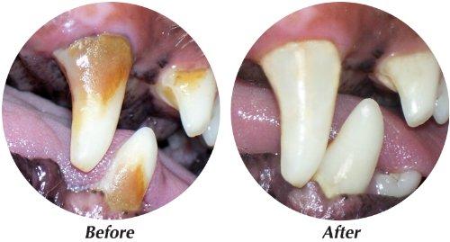 Tropiclean Fresh Breath Clean Teeth Gel Remove Plaque, My Pet Supplies