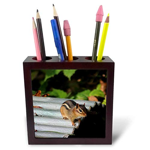 3dRose Stamp City - Animals - Photograph of a Delightful Chipmunk in Our Yard Posing for The Camera. - 5 inch Tile Pen Holder (ph_302843_1)