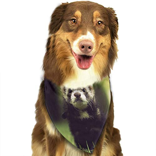 CZSJzd Lovely and Cute Baby Ferrets Or Weasel in Summer Garden Fashion Dog Bandana Pet Accessories Easy Wash Scarf