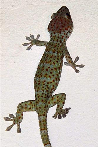 (Tokay Gecko Journal: 150 page lined notebook/diary)