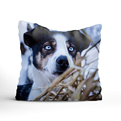 Sophia Emma Throw Pillow Case Dog Near Bush Zipper Pillowslip Pillowcase for Teen Boy Girl Kid Children ()