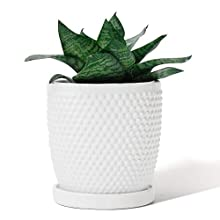 POTEY 053601 Plant Pot with Drainage Hole & Saucer- 5.5 Inch Glazed Ceramic Modern Vintage-Style Hobnail Textured Planters Indoor Bonsai Container for Plants Flower(Shiny White, Plants Not Included)