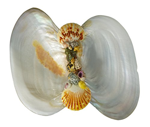 Polished Seashell Clam Candy Dish Arrangment, River Oyster, Table Top Decor, Wedding Center Pieces (Shell Candy Dish)