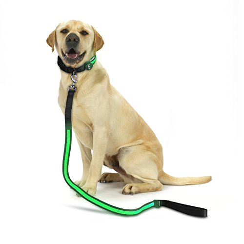 (Glowseen LED Dog Leash - USB Rechargeable- LED Illuminating Dog Safety Leash-Makes Your Dog Visible, Safe & Seen)