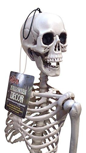 Plastic Realistic Skeleton 36in (Prank Chair Costume)