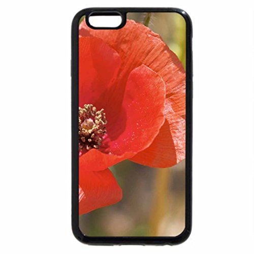 iPhone 6S / iPhone 6 Case (Black) The Pretty Poppy