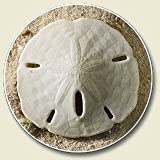 Highland Home Absorbent Stoneware Single Car Coaster - Sand Dollar on Sand