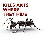 Raid Ant Killer Baits, For Household Use, Child
