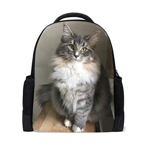Cute Fashion Backpack Infantry Pack Travel Bag Norwegian Forest Kitten