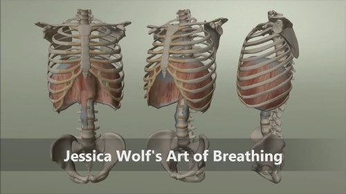 Jessica Wolf's Art of Breathing: Rib Animation DVD