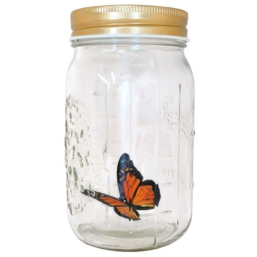 Butterfly in a Glass Jar - Monarch