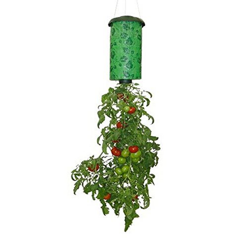 Upside Down Tomato Plant - Layboo Hanging Tomato Plant, Vegetable Grower,Upside Down Plant Holder Pot Hanging Sky