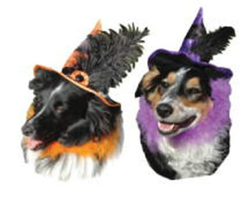Witch Hat with Marabou Collar ()