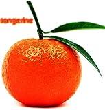 20 TANGERINE Mandrin Orange Citrus Reticulata Fruit Tree Seeds