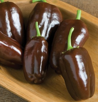 David's Garden Seeds Pepper Bell Sweet Chocolate D579A (Brown) 25 Organic - Bell Chocolate Pepper