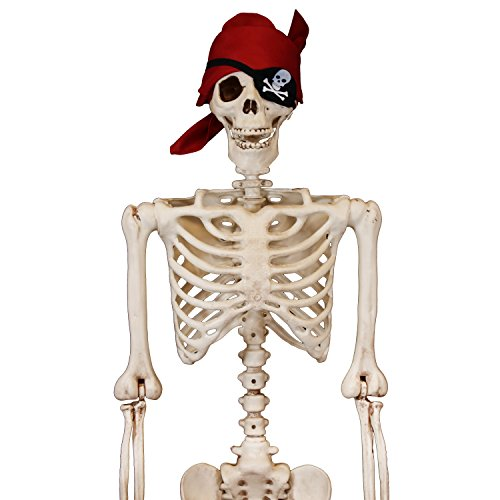 Amazon.com: 5 ft Pose-N-Stay Life Size Skeleton Full Body Realistic ...