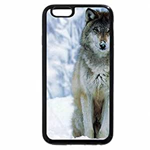 iPhone 6S / iPhone 6 Case (Black) a wolf