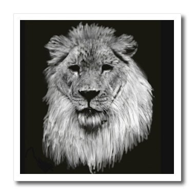 3dRose ht_36131_3 African Lion Full Head Painting in Black and White-Iron on Heat Transfer for White Material, 10 by 10-Inch