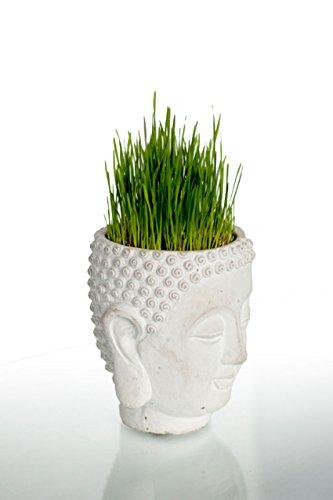 Vagabond Vintage, Cement Buddha Head Planter