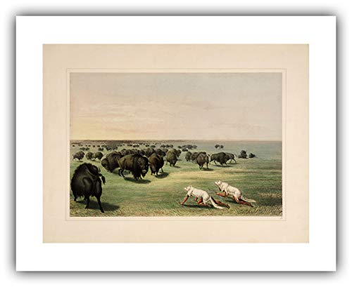 The Ibis Print Gallery - George Catlin's American Indian Portfolio : ''Buffalo Hunt with Wolf-Skin Mask'' (1844) - Giclee Fine Art Print