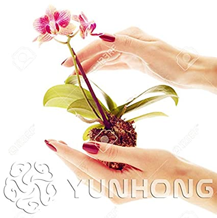 Go Garden 100 Stücke Mini Orchidee-Bonsai Pflanze Für Hausgarten Phalaenopsis Orchidee Pflanze, Kaufen-Direkt-aus-China Orq