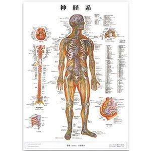 【メディカルブック】神経系 パネル入(SR-118B)   B005K6KAFO