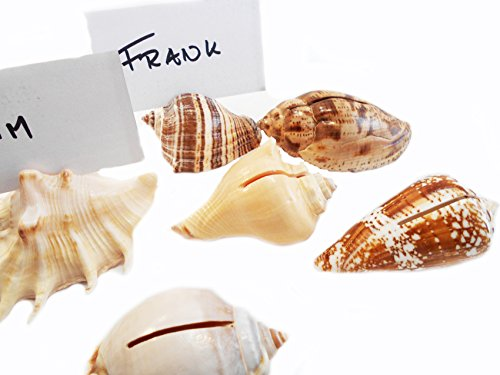 Set of 6 Genuine Seashell Place Card Holders Beach Wedding Favor Nautical Party Decor Sea Shell Table Sets