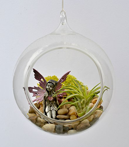 (Pixie Glare Hanging Glass Terrarium Fairy Garden Kit. 5.5
