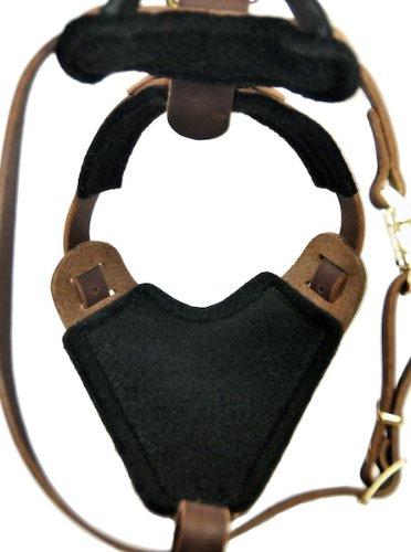 leather bulldog harness - 2