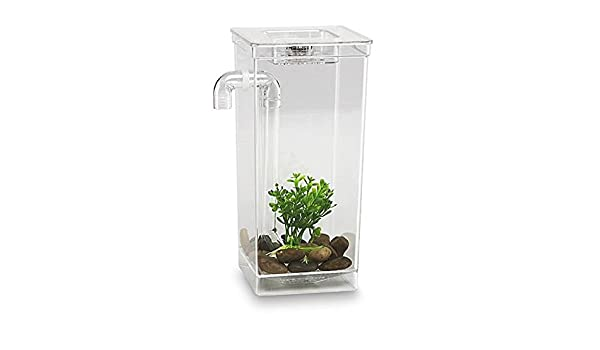 As Seen On TV My Fun Fish Tank 56028- pecera que se limpia sola, iluminación LED Betta: Amazon.es: Productos para mascotas