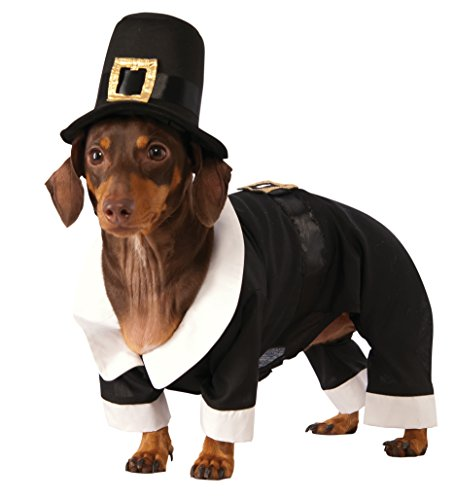 Thanksgiving Costumes For Dogs (Rubie's Pilgrim Boy Dog Costume,)