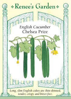 Cucumber - Chelsea Prize Seeds ()