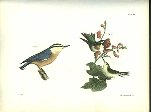 J W Hill hand-colored print 1844 Red-bellied Nuthatch Ruby-throated Hummingbird