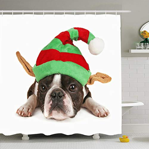Ahawoso Shower Curtain 66x72 Inches Friend White Boston Terrier Christmas Hat On Elf Holidays Costume Dog Baby Best Big Looking Waterproof Polyester Fabric Set with -