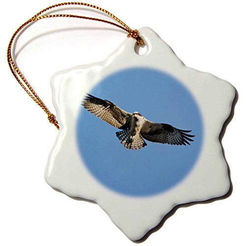 Ornament Harbor Bar (3dRose orn_90755_1 Maine, Acadia NP, Peregrine Falcon bird, Bar Harbor - US20 PSO0003 - Paul Souders - Snowflake Ornament, Porcelain, 3-Inch)