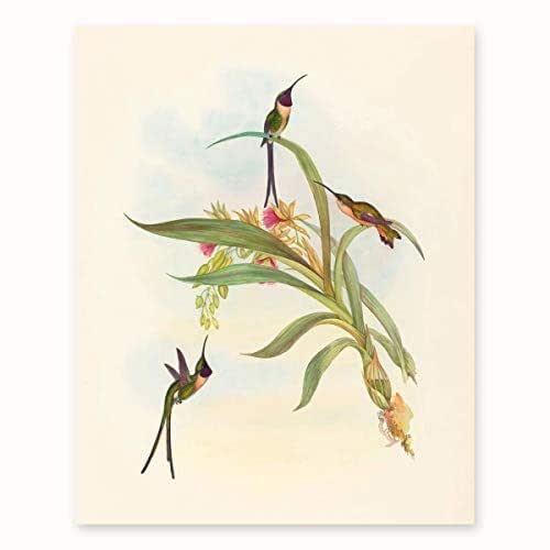 Amazon.com: Bird Art for Walls, Hummingbird Print